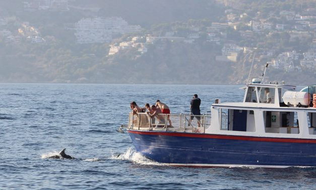Dolphin sightings on the Costa Tropical